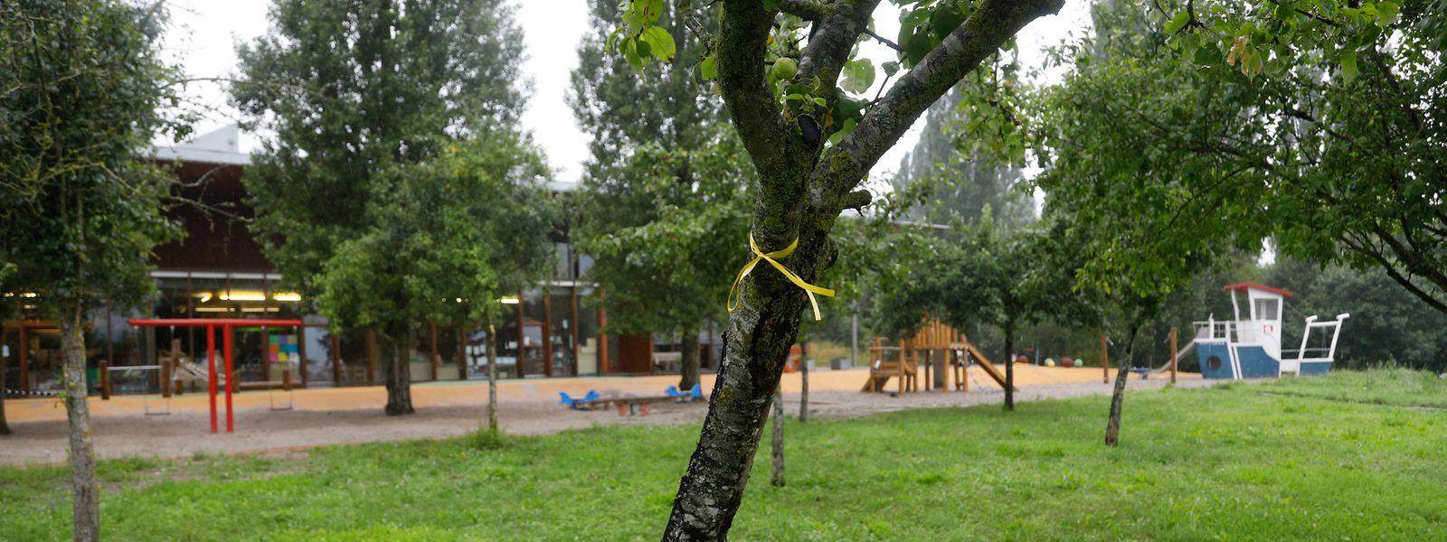 Damit Bürger besser erkennen, an welchen öffentlichen Plätzen der Mundraub erlaubt ist, markiert die Gemeinde Schengen Bäume und Sträucher mit einem gelben Bändchen.