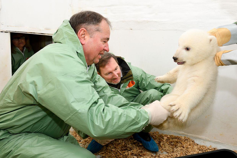 Tierarzt und Leiter des Berliner Tierparks, und Tierarzt Günter Strauß knien im Gehege eines jungen weiblichen Eisbären.