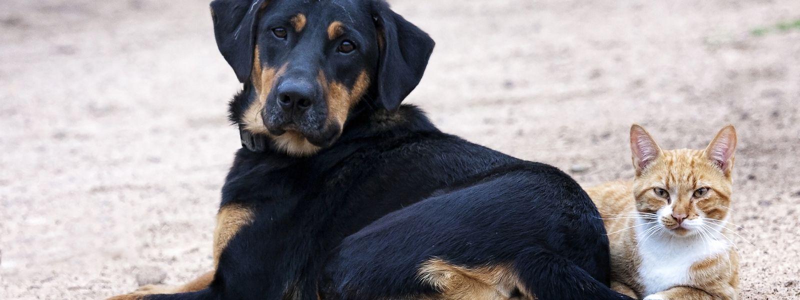 Damit der Urlaub nicht ins Wasser fällt, müssen die Impfpapiere der Haustiere auf dem aktuellsten Stand sein.