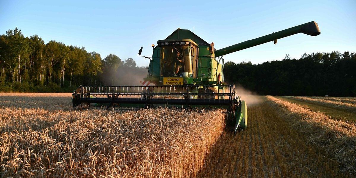 Welche Landwirtschaft wollen die Europäer? Die Mitgliedsstaaten sind sich uneinig, ob das Herbizid Glyphosat noch für weitere fünf Jahre versprüht werden darf.