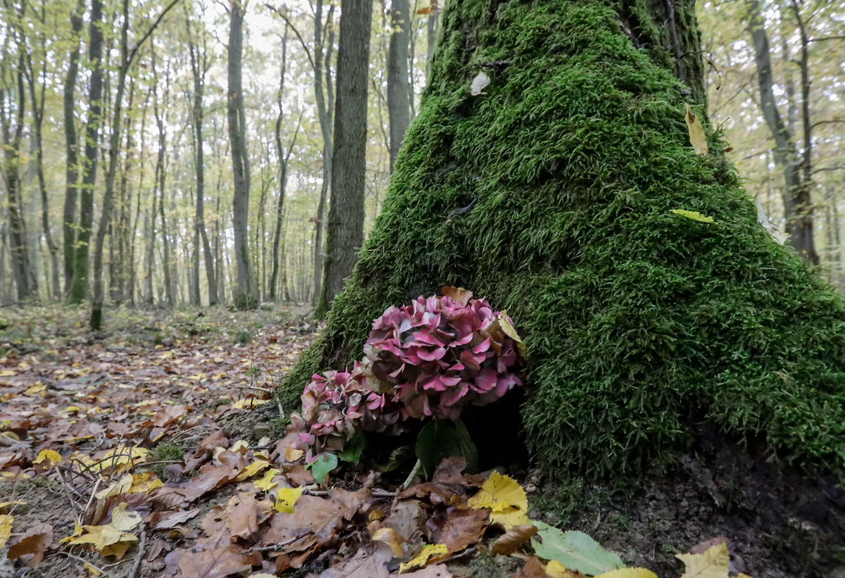 A fleeting memento at the forest cemetery in Kehlen Photo: Guy Jallay