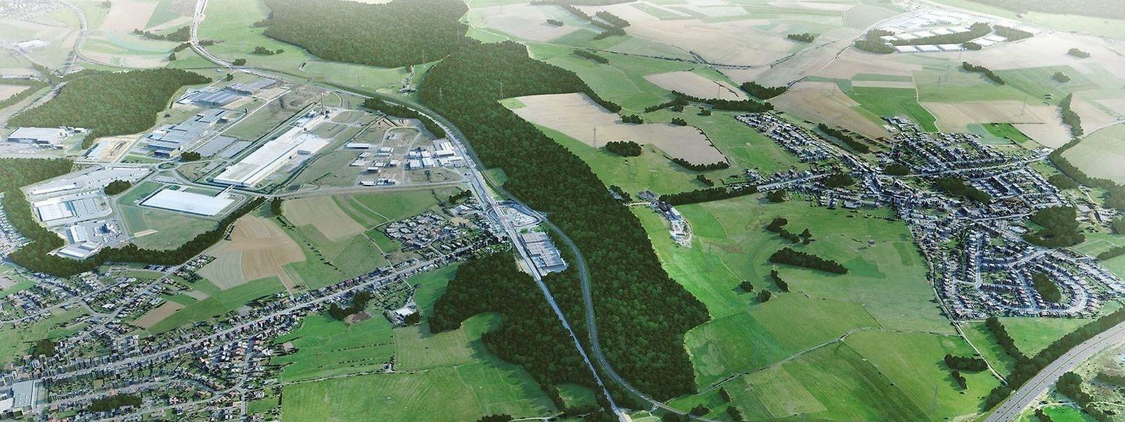 Le gouvernement prévoit le reboisement d'une surface de 5,2 hectares pour compenser la perte des arbres défrichés pour la construction de la route
