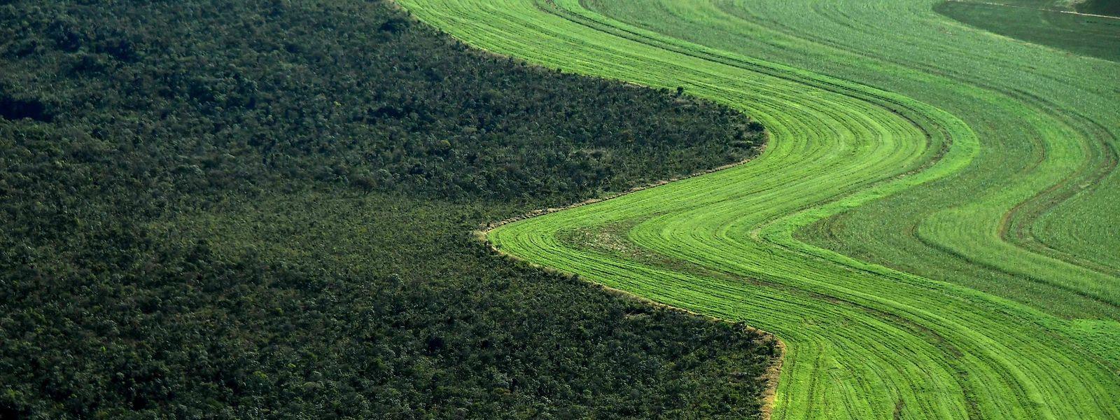 Ein landwirtschaftlich genutztes Feld neben einer Savanne in Rio Preto in Brasilien. Der Weltklimarat fordert mehr Maßnahmen zum Schutz von Wäldern und Mooren.