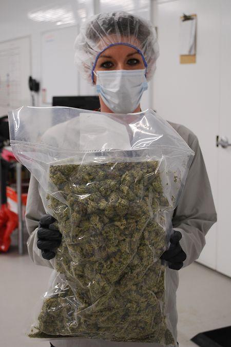 Die Cannabisblüten werden getrocknet und dann vakuumverpackt. Jeder Beutel enthält zwischen 600 und 1000 Gramm Marihuana.