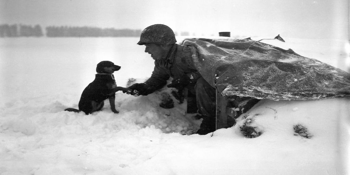 Auf den Hund gekommen: Begegnung von Mensch und Tier mitten auf dem Schlachtfeld.