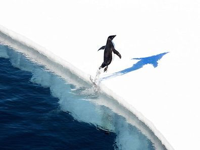 The world's largest marine reserve aimed at protecting the pristine wilderness of Antarctica will be created