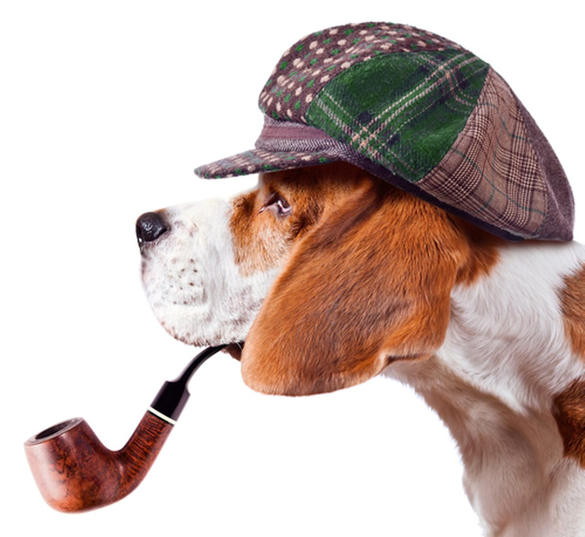 Sherlock Honds crime tours for your dog detective Photo: shutterstock