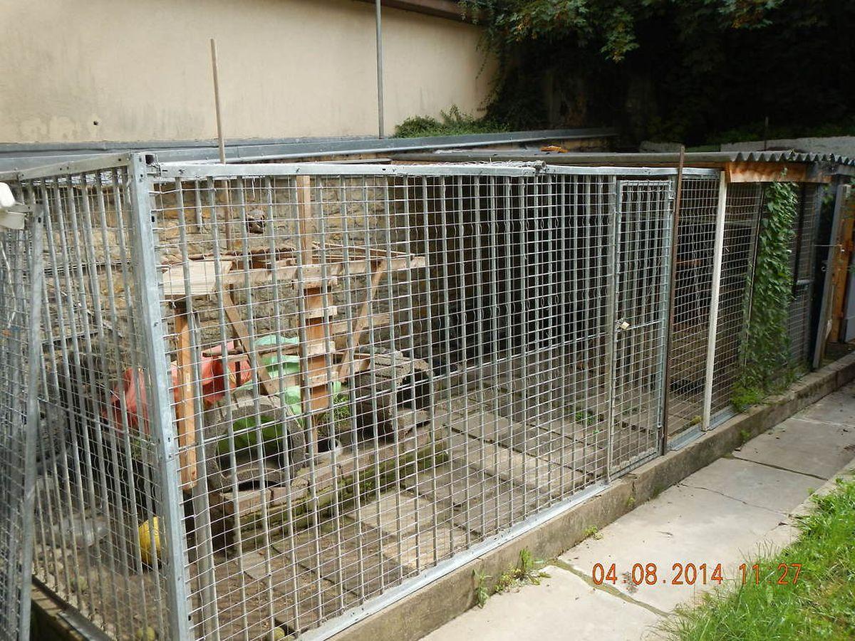 In diesem Käfig mussten die drei Waschbären leben.