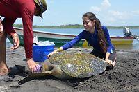 El Salvador Schildkrötenuntersuchung
