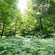 Der Wald muss ökologische, ökonomische und soziale Rollen erfüllen.