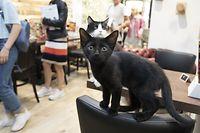 Reportage Katzenkaffee in Luxemburg