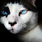 Vídeo. Meownuel Neuer é um gato e defende penáltis