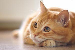 Katze liegende
