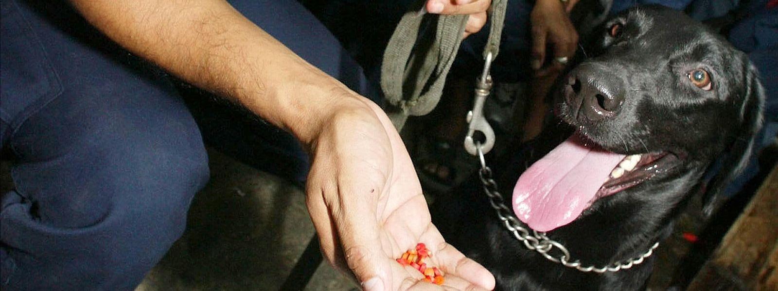 L'efficacité du flair des chiens en matière de détection de stupéfiants n'est plus à démontrer.
