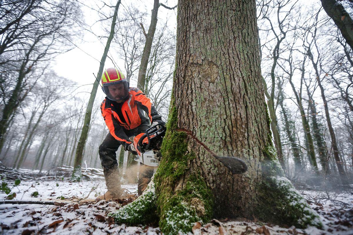 Eine halbe Million Kubikmeter Holz wird in Luxemburg pro Jahr geschlagen.