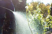 Ab 2020 soll der Einsatz von Glyphosat in Luxemburg komplett verboten werden.