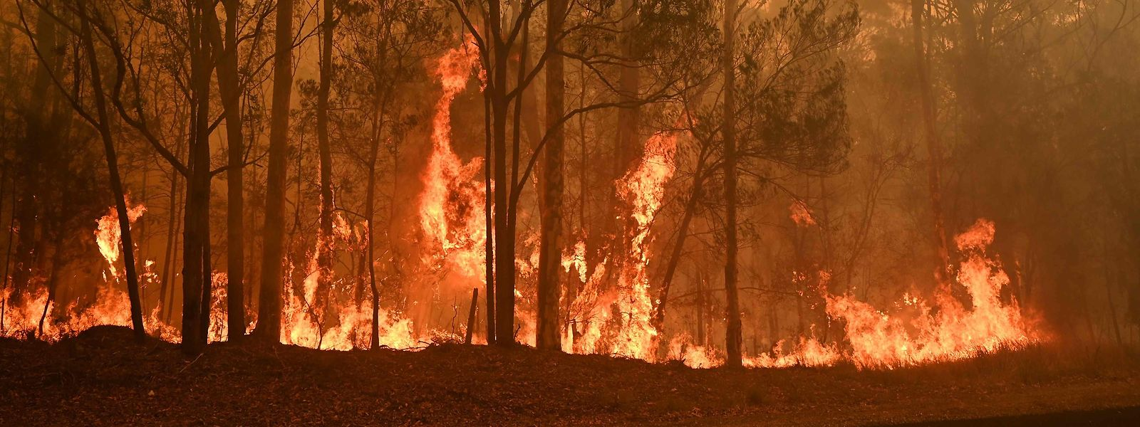TOPSHOT - A bushfire burns in the town of Moruya, south of Batemans Bay, in New South Wales on January 4, 2020. - Up to 3,000 military reservists were called up to tackle Australia's relentless bushfire crisis on January 4, as tens of thousands of residents fled their homes amid catastrophic conditions. (Photo by PETER PARKS / AFP)