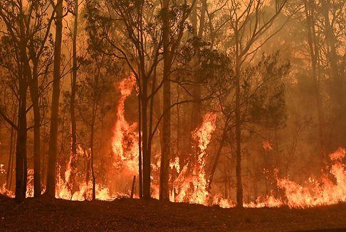 Brände in Australien: Tennisstars spielen Charitymatches