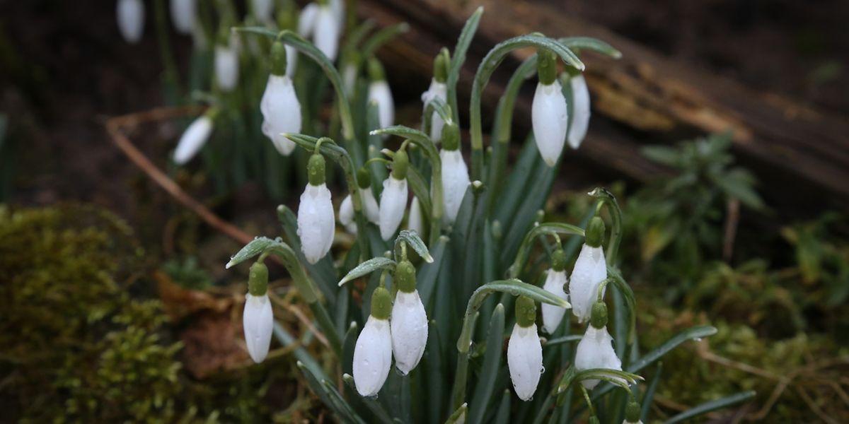 Für die Wetterexperten hat das Frühjahr bereits begonnen und auch die erste Vorboten lassen sich sehen.