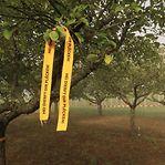 Contra o desperdício. Já se pode colher fruta em árvores das comunas com fita amarela