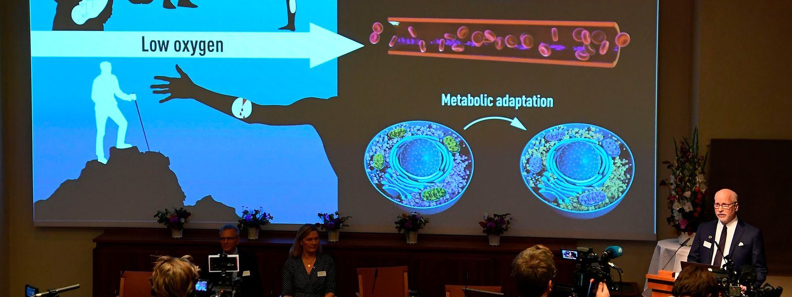 Le prix Nobel de cette année récompense des travaux ayant révélé les mécanismes moléculaires à l'œuvre  dans l'adaptation des cellules à l'apport variable d'oxygène.