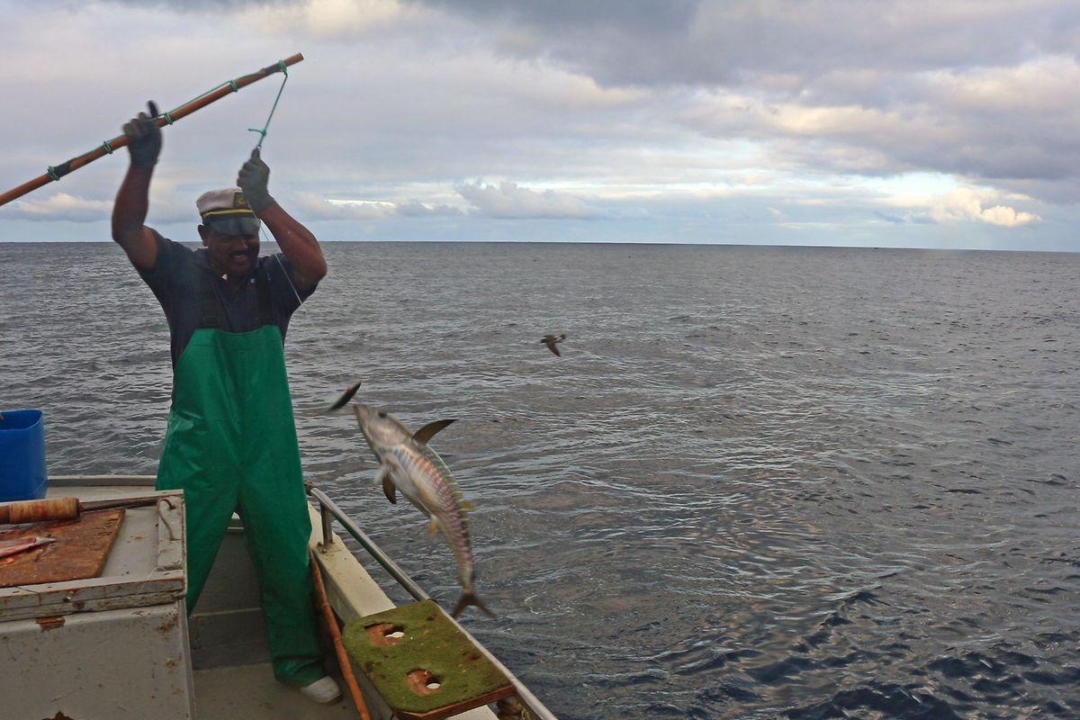 Knochenjob: Thunfischfang mit Peter Benjamin vor Saint Helena.