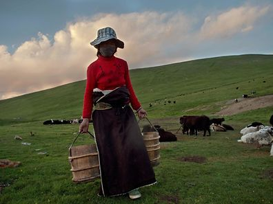 TOPSHOT - In this picture taken on July 27, 2016, a Tibetan nomad herder holds two buckets of fresh yak milk in Yushu county in the mountains of Qinghai province. The number of Tibetans maintaining the pastoral lifestyle is dwindling, mostly due to a Chinese government push to decrease the Tibetan nomad population and move them into resettlement villages, sometimes by force. / AFP PHOTO / NICOLAS ASFOURI
