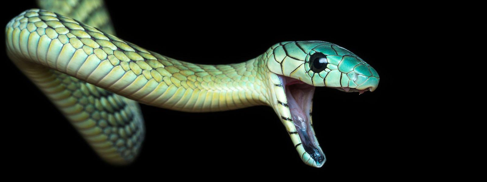 Der Angeklagte handelte in Esch/Alzette mit exotischen Tieren. Dazu zählten unter anderem auch giftige Schlangen, Skorpione und Spinnen.