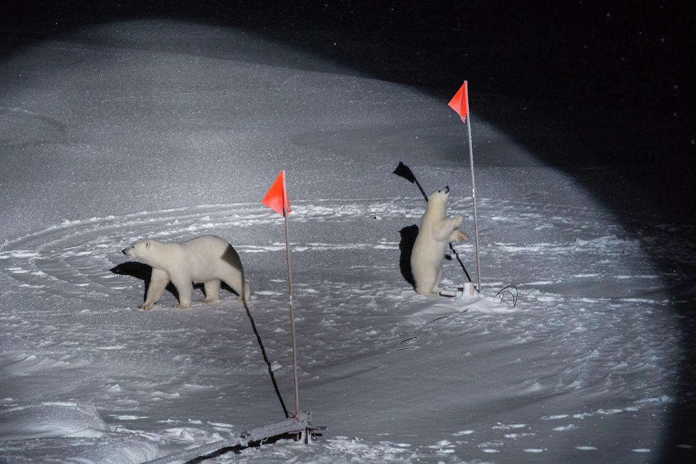 """Eisbärenmutter und -junges betrachten auf einer Eisscholle im Arktischen Ozean Flaggen und Ausrüstung neben dem Polarstern-Schiff (Titel """"Polar Bear and her Cub""""). Fotografin Esther Horwath erhielt dafür den ersten Preise in der Kategorie Environment - Singles."""
