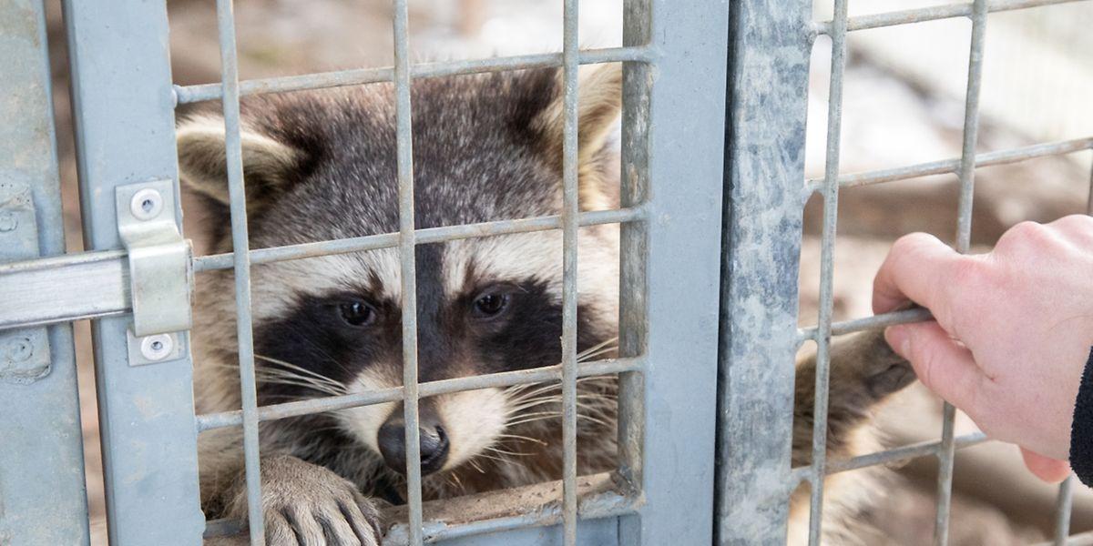 In der Pflegestation für Wildtiere in Düdelingen werden nicht nur Vögel gepflegt