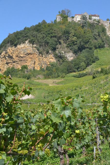 """Am Fuße des Dorfes Château-Chalon wächst der bekannteste """"vin jaune""""."""