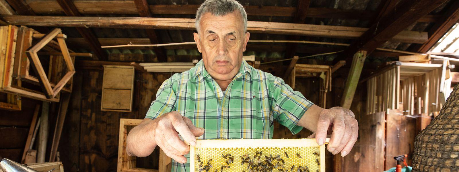 In seinem Bienenstand experimentiert Michel Colette mit Bienenkörben aus Stroh und Naturwaben. Seine 30 Völker dürfen sich frei entfalten.