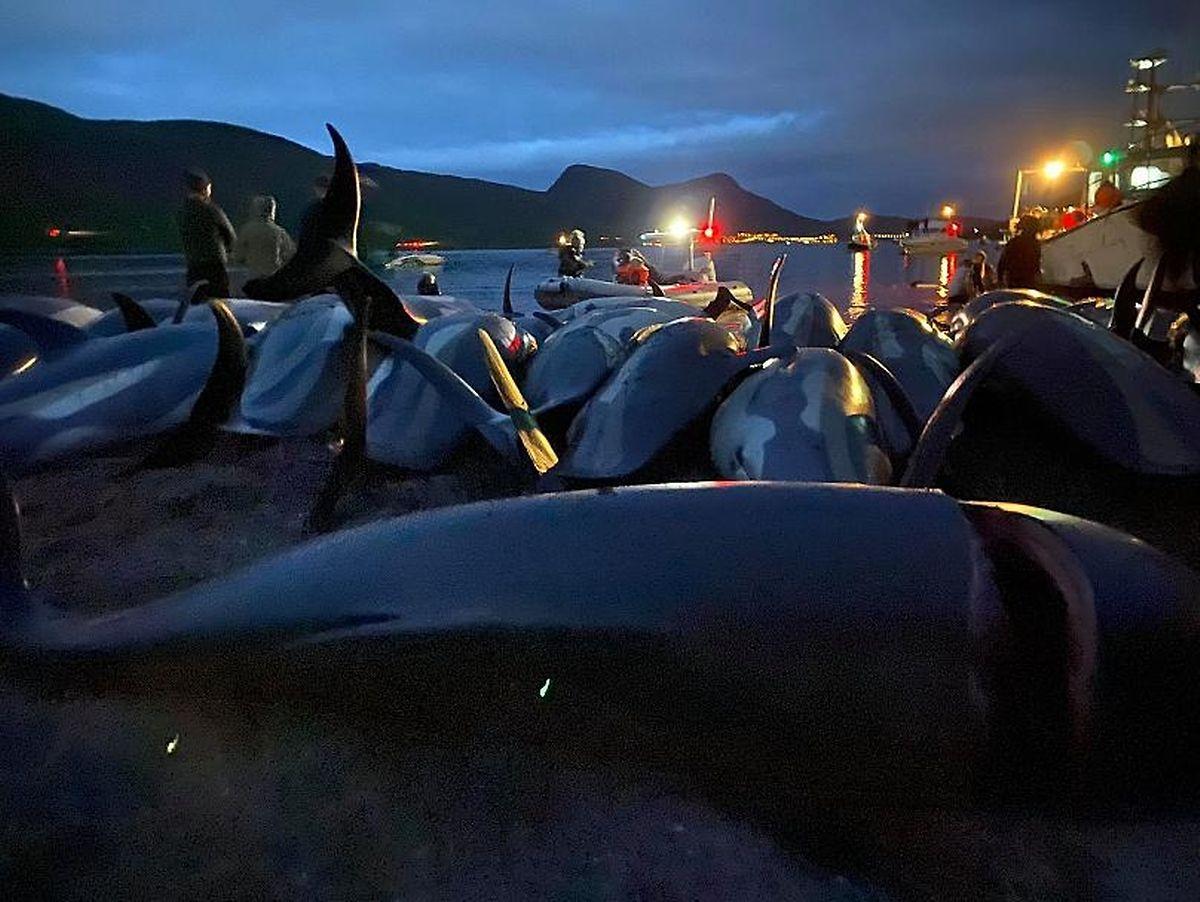 Milhares de golfinhos assassinados na noite de 12 de setembro nas Ilhas