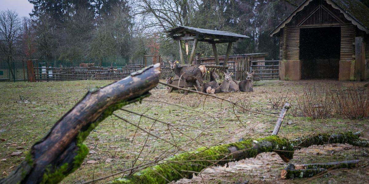Der Tierpark liegt an der höchsten Stelle des Gaalgebierg und war somit dem Sturm besonders ausgesetzt.