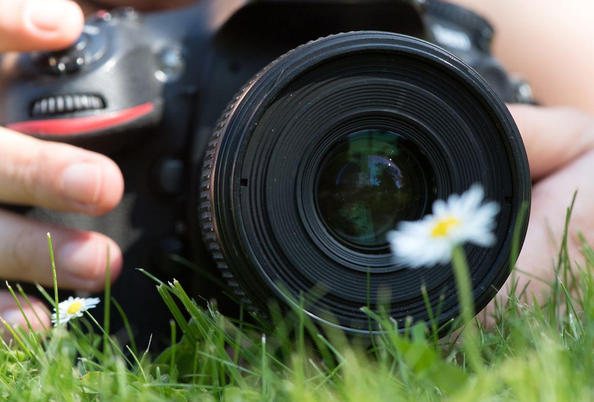 Für jede Fotosituation optimal aufgestellt ist man aber nur mit einer Spiegelreflex- oder Systemkamera und der jeweils passenden Optik. Makro-Objektive für den Nachbereich nehmen ein Gänseblümchen formatfüllend auf.