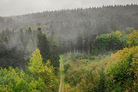 Der Gréngewald ist das einzige Waldmassiv Luxemburgs.