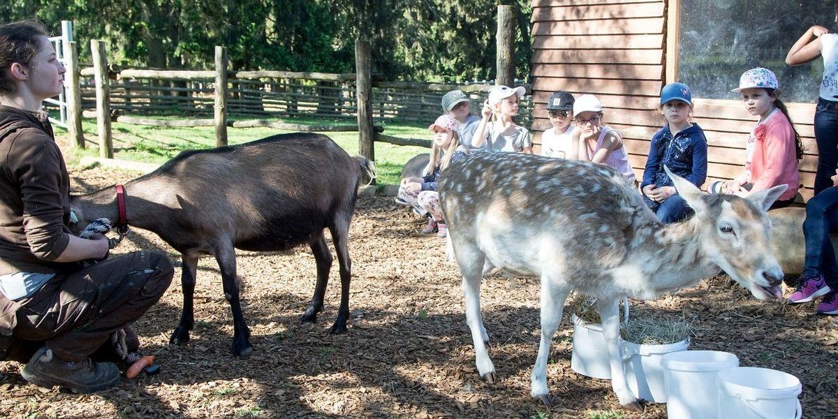 Wenn das Bambi in den Mittelpunkt will, müssen auch mal Tierpflegerin Lena Righetto und Ziege Pünktchen kurz weichen.