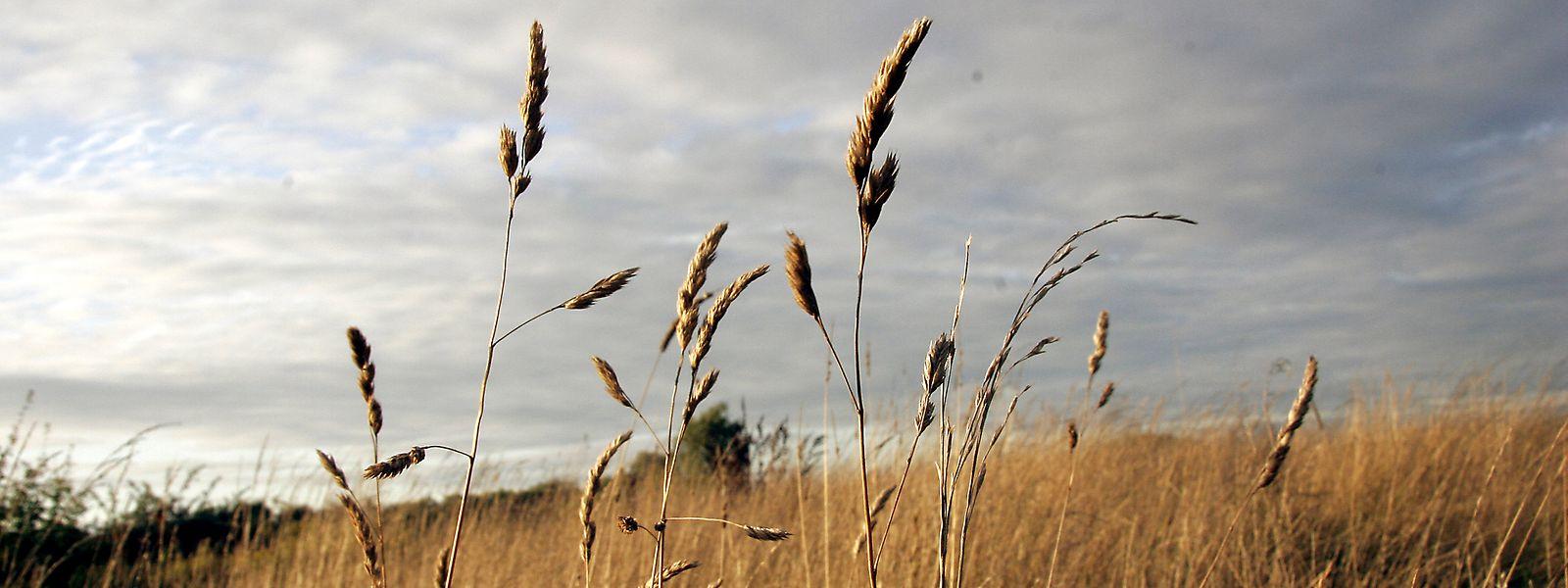 Selon le ministère de l'Agriculture, seules les productions de fourrage et de maïs n'ont pas été impactées par les aléas météorologiques.