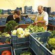 Biologischer Obst- und Gemüseanbau - hier bei co-labor - ist eine von vielen Branchen der Solidarwirtschaft.