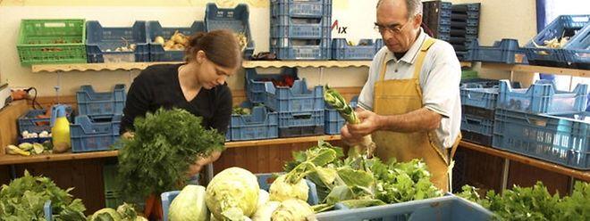 Die Mitarbeiter von Co-Labor bereiten das frisch geerntete Gemüse für den Verkauf vor.