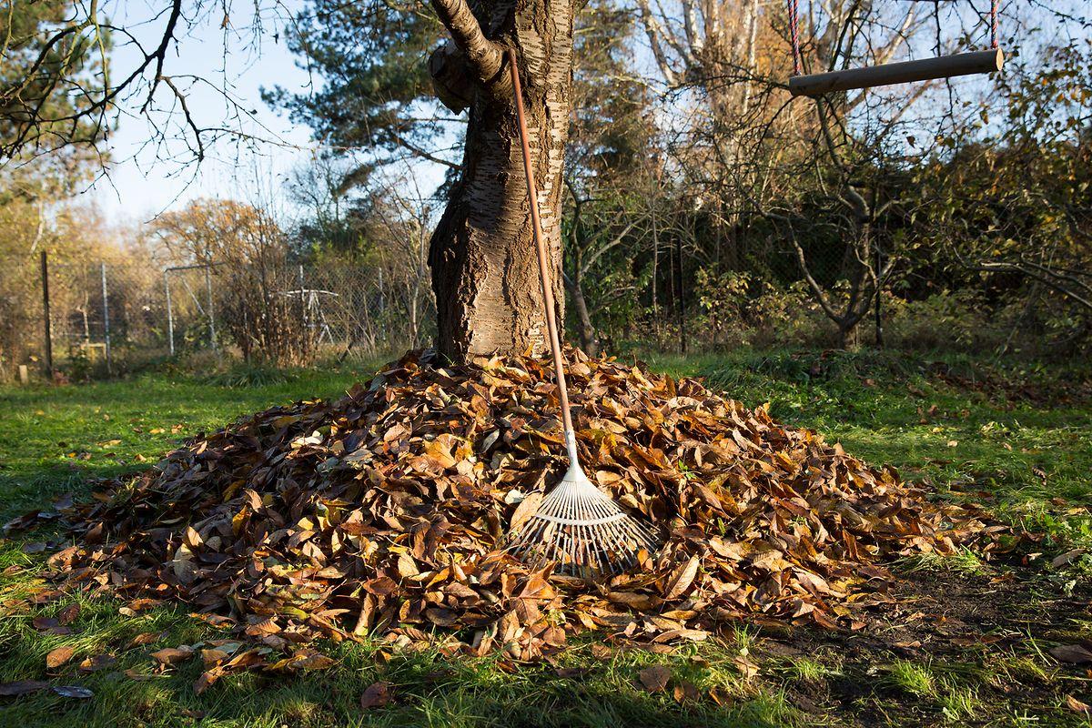 Laubhaufen sind nicht nur Abfall - heruntergefallenes Laub bietet Igeln und anderen kleinen Säugetieren sowie Insekten, Reptilien und Amphibien einen Unterschlupf für Herbst und Winter.