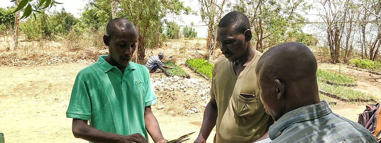 De nombreux agriculteurs en Afrique n'ont pas accès à un produit d'assurance adéquat pour protéger leurs exploitations.
