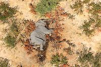 "This image provided on July 3, 2020 courtesy of the National Park Rescue charity shows the carcass of one of the many elephants which have died mysteriously in the Okavango Delta in Botswana. - Hundreds of elephants have died mysteriously in Botswana's famed Okavango Delta, the wildlife department said on July 2, 2020, ruling out poaching as the tusks were found intact. The landlocked southern African country has the world's largest elephant population, estimated to be around 130,000. (Photo by - / NATIONAL PARK RESCUE / AFP) / RESTRICTED TO EDITORIAL USE - MANDATORY CREDIT ""AFP PHOTO /NATIONAL PARK RESCUE"" - NO MARKETING - NO ADVERTISING CAMPAIGNS - DISTRIBUTED AS A SERVICE TO CLIENTS"