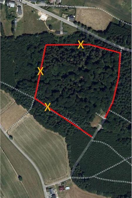 Das betroffene Waldstück bei Rambruch.