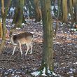 Parc Merveilleux en hiver, Bettembourg, le 21 jancier 2016. Photo: Chris Karaba