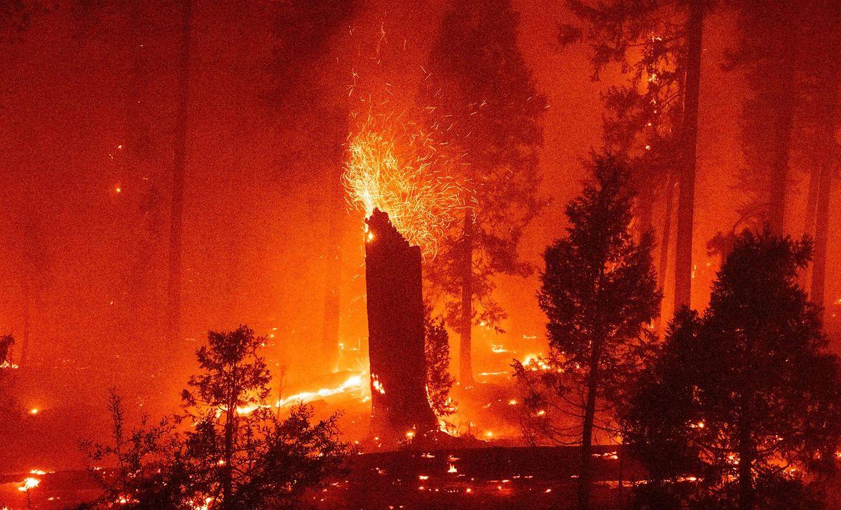 Waldbrände treten in der Folge von Dürren auf.
