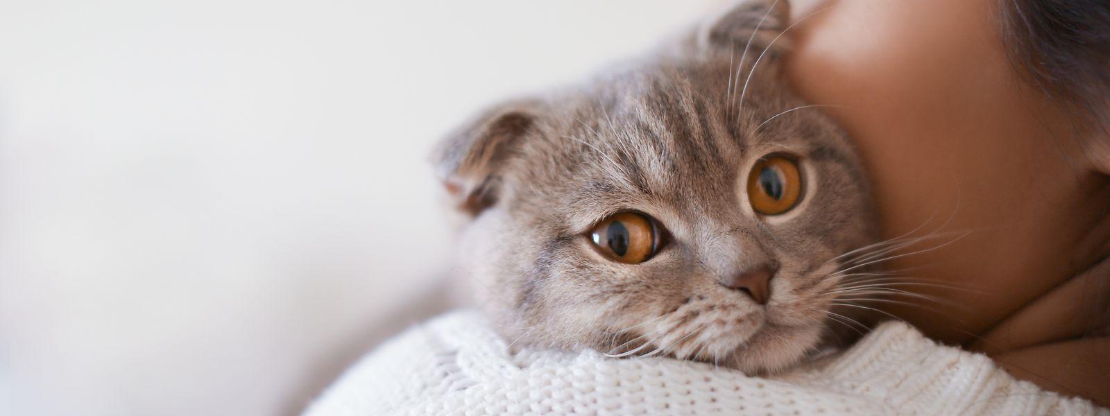 Genaue Zahlen liegen nicht vor, aber laut einer Studie leiden in den USA rund zwölf Prozent der Bevölkerung unter einer Katzen- oder Hundeallergie. Die Werte für europäische Länder dürften vergleichbar sein.