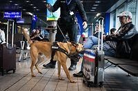 Lokales,Hundestaffel der Douane, Drogensuchhunde. Gepäck-Personendurchsuche nach Drogen.Foto: Gerry Huberty/Luxemburger Wort
