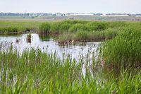 Depuis 1963, date de la première loi sur la protection de la nature, le Luxembourg réfléchit à des mesures pour protéger son environnement et ses biotopes.