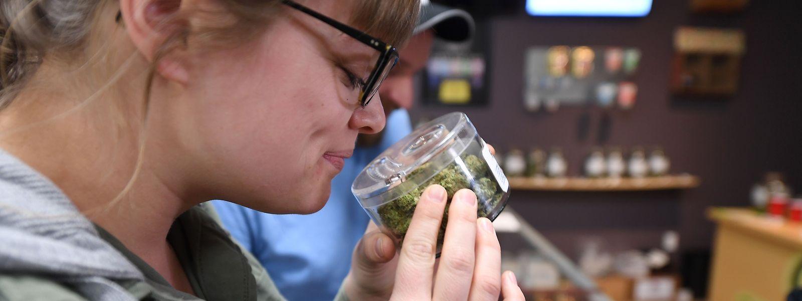 Seit dem 2. Januar ist Cannabis in Kalifornien auch legal zu erwerben, wenn der Käufer keine medizinische Zwecke damit verfolgt.